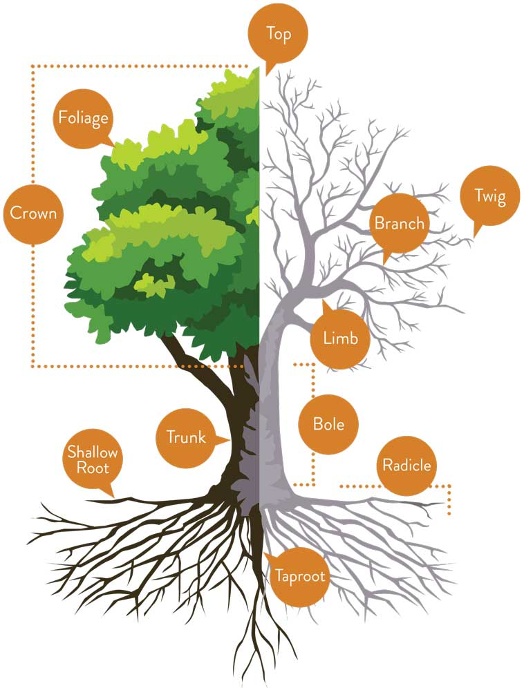 LesArbres-Tree-05_opt_01
